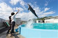 Dolphin Trainer Experience
