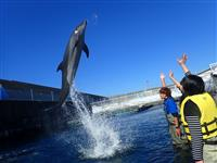 Interacting with Dolphins Program