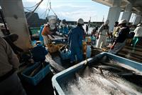 Sorting the Catch